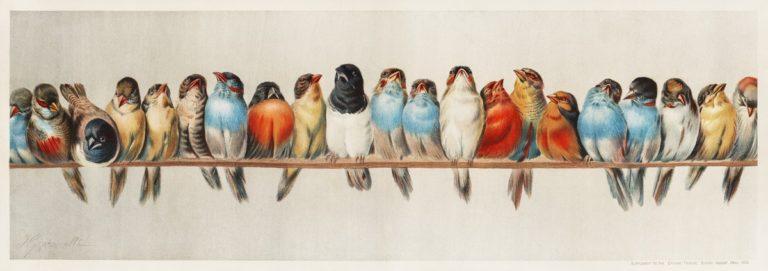 Le réveil des oiseaux